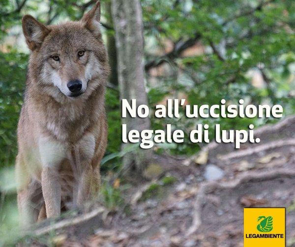 No uccisione legale di lupi
